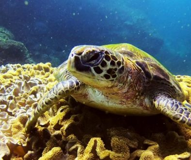 What's the best time for Diving in Oman
